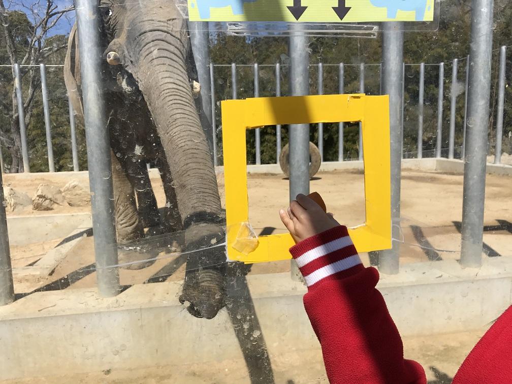 ゾウにエサやり